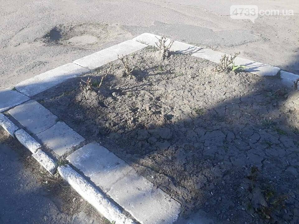В центрі Сміли зловмисники викрали 25 кущів троянд , фото-8