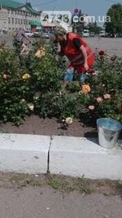 В центрі Сміли зловмисники викрали 25 кущів троянд , фото-11