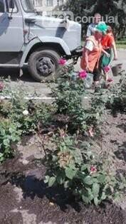 В центрі Сміли зловмисники викрали 25 кущів троянд , фото-10