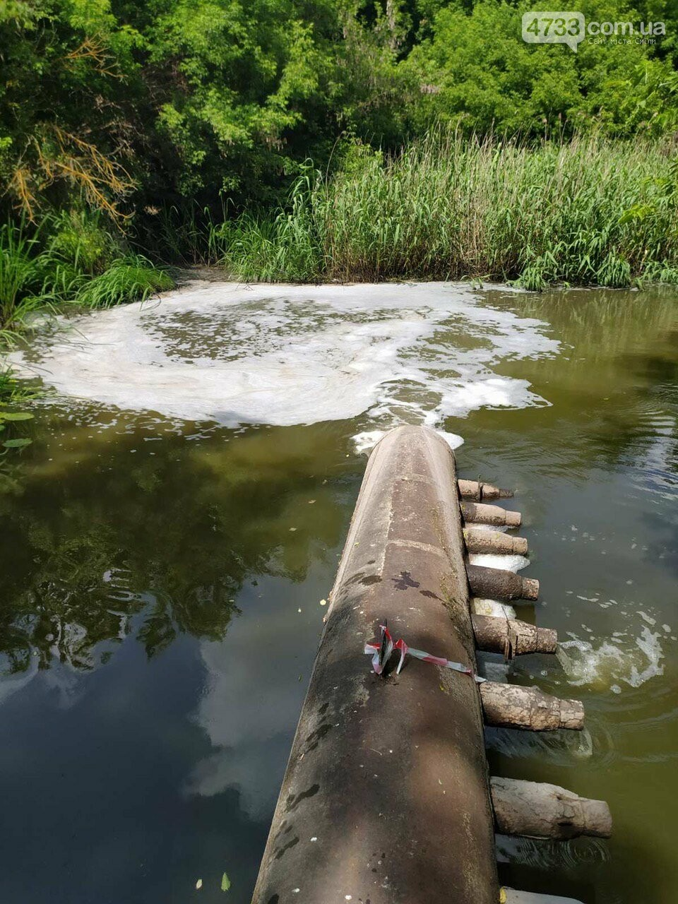 Через скид невідомої речовини на Тясмині гине риба, фото-4