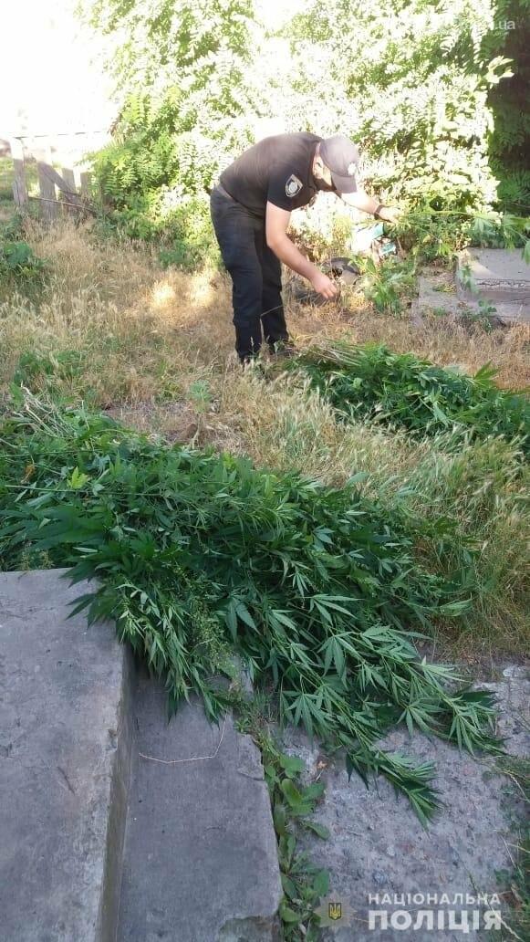 Смілянин на городі вирощував коноплі, фото-1