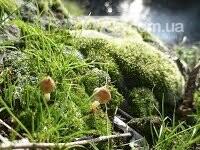 Де провести осінні вихідні: ТОП найкрасивіших місць Черкащини, фото-113