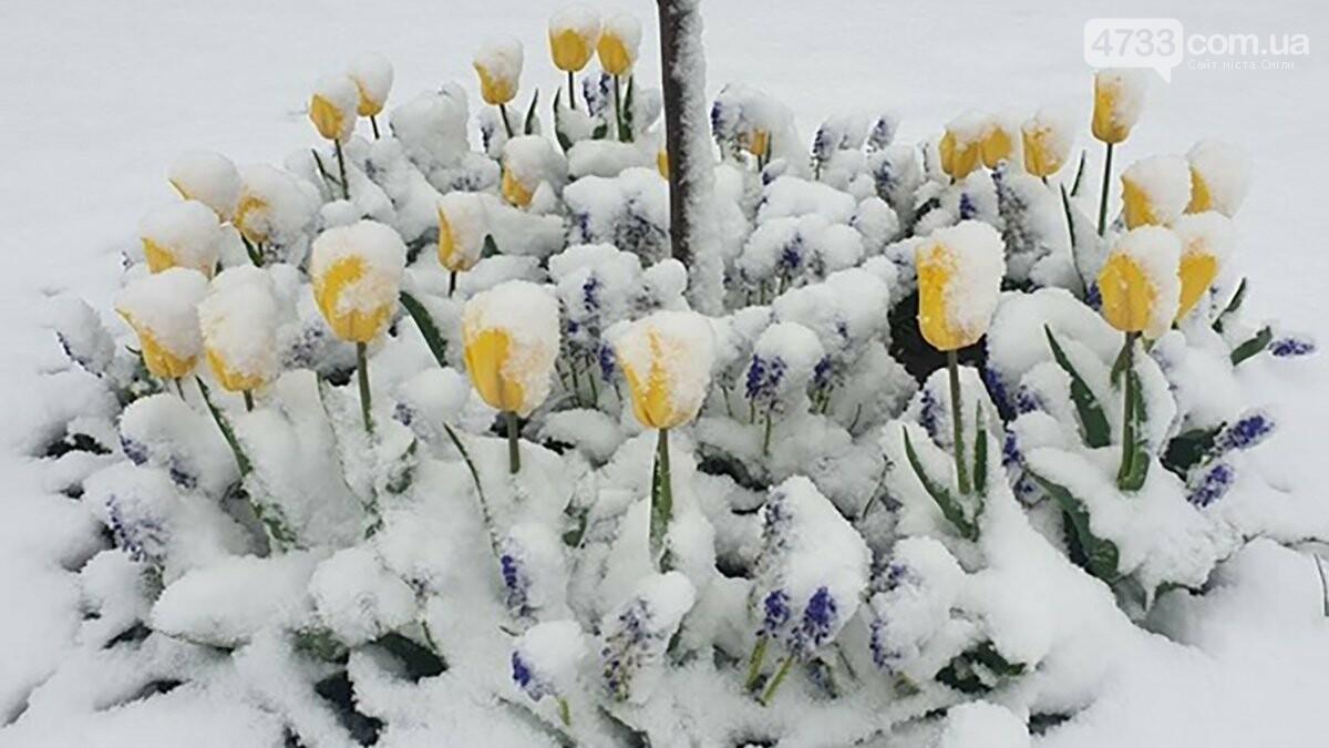 На зміну заморозкам йде потепління і дощі, фото-1