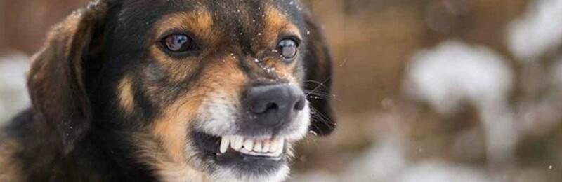 У Смілі за пів року звернулося до лікарні 85 осіб, покусаних тваринами
